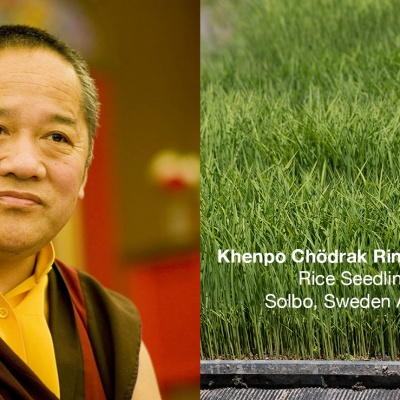 Fördjupningskurs i buddhistisk filosofi